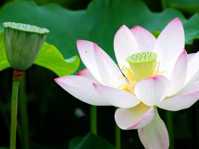 莲花怎么叠步骤图解法