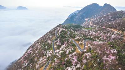 """崇阳:一条路""""激活""""50平方公里产业带"""