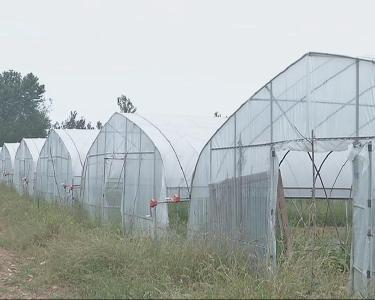 视频 | 记者走基层 大宇蔬菜产业基地:重振旗鼓孕希望