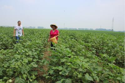 农村新报:深入推进农业供给侧结构性改革