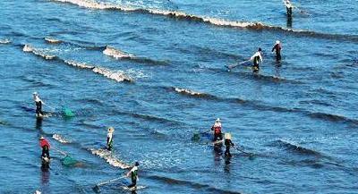 天门水产养殖保险破冰 已投保5000亩最高每亩可赔2000元
