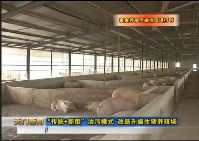 """视频丨畜禽养殖污染治理进行时 """"传统+新型""""治污模式 改造升级生猪养殖场"""