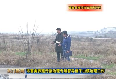 视频丨畜禽养殖污染治理进行时 市畜禽养殖污染治理专班督导佛子山镇治理工作