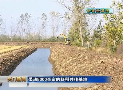 视频丨新春走基层      彭市罗桥村:发展虾稻共作产业 建设美丽乡村