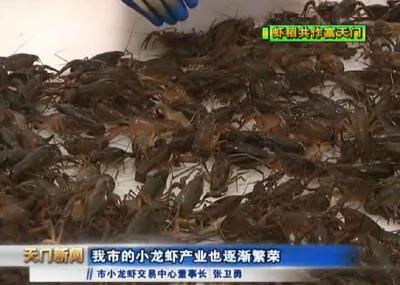 视频丨虾稻共作富天门  市小龙虾交易中心:助推全市虾稻产业做大做强