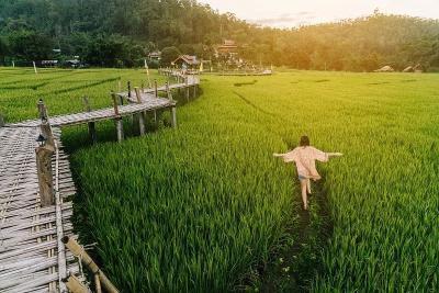 循环农业让农业生产走上可持续发展良性轨道