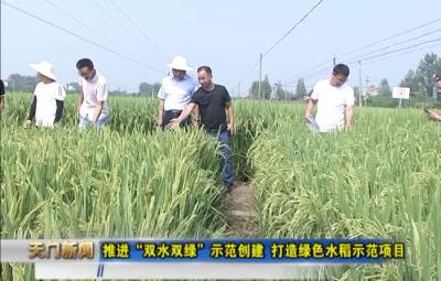 """视频丨推进""""双水双绿""""示范创建 打造绿色水稻示范项目"""