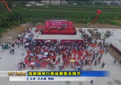 视频丨渔薪镇举行蔡庙葡萄采摘节