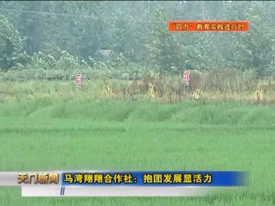 天门的小龙虾跑到了重庆,深圳……学习这个合作社!