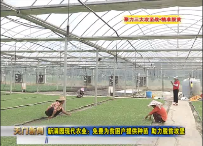 视频丨聚力三大攻坚战•精准脱贫 新满园现代农业:免费为贫困户提供种苗 助力脱贫攻坚