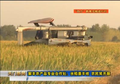 """视频丨""""四力""""教育实践进行时 聚丰农产品专业合作社:水稻喜丰收 农民笑开颜"""