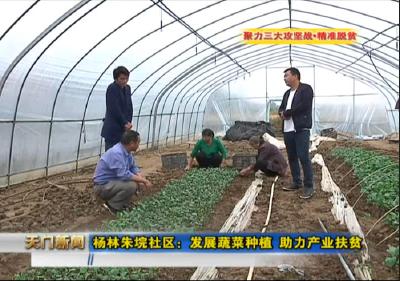 视频丨聚力三大攻坚战•精准脱贫 杨林朱垸社区:发展蔬菜种植 助力产业扶贫