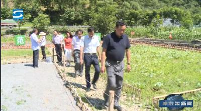 李波深入新华、阳日镇调研农业产业发展