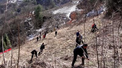 林区文化和旅游局开展义务植树活动