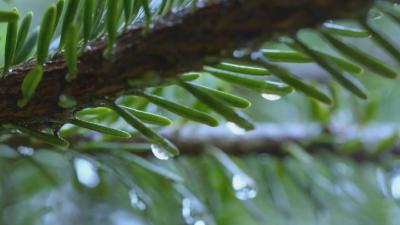 林区将有一次降水天气过程