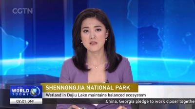央视英语频道:摄影师在神农架大九湖捕捉鸟类的天堂