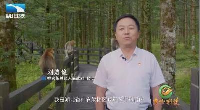 林区人民政府区长刘启俊为神农架代言