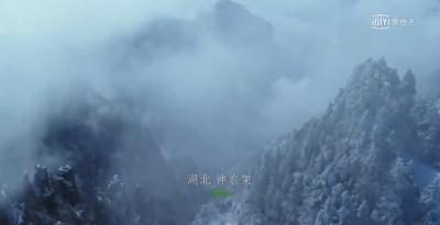 十集大型纪录片《影响世界的中国植物》播出  神农架特有植物亮相被世人熟知