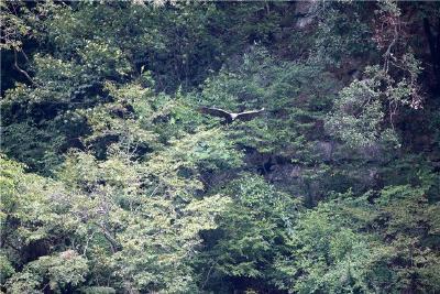 神农架:受伤国家保护动物金雕被放飞蓝天