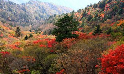 太美了!神农架秋日美景