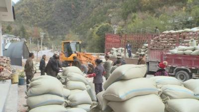 新华镇龙口村80多户农民,靠种这个收入近50万元