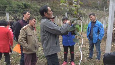 神农架:科教兴农助力乡村振兴 技术培训为村民解难题