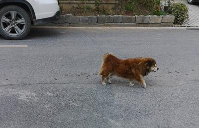【创建文明城市 建设和谐林区】—— 遛狗不牵狗绳,松柏不文明养犬行为仍然存在