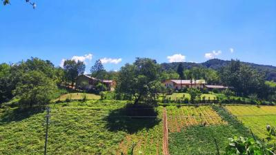 神农架3个村上榜首批国家森林乡村,有你家乡吗?