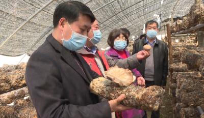 沈绍平调研红坪镇农业企业复工复产和春耕备耕工作