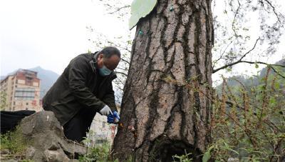 神农架国家公园管理局全力预防林业有害生物入侵