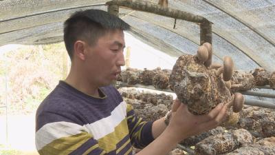 记者走基层 | 张绍林:致富不忘反哺社会 带动精准脱贫户增收