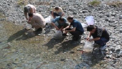 神农架增殖放流本地珍稀鱼苗10万多尾