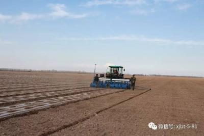 八十一团9.4万亩棉田春播工作全面展开
