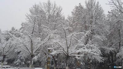 @随州人,随州气象台启动暴雪Ⅲ级应急响应