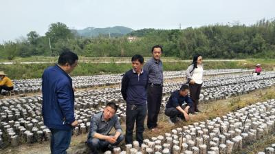 吉林农业大学教授姚方杰一行到随州指导黑木耳产业发展