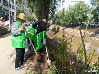 绿化管理处构筑花溪内河生态绿墙