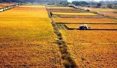 粮食生产提质增效 基本面良好