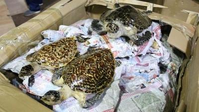 二手交易平台现野生保护动物交易 活体和标本均有