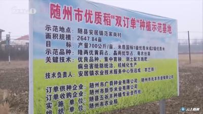 推广优质稻种植 振兴随州稻米产业