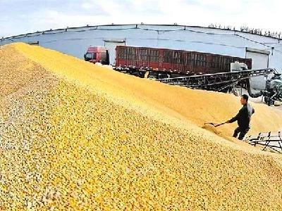 随州市部署政策性粮食库存大清查