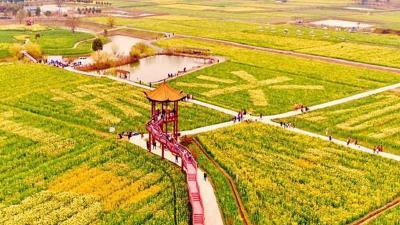 首届湖北油菜花旅游节开幕