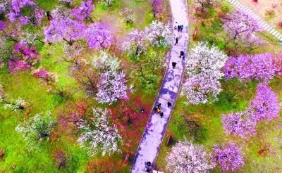 央媒集体为东湖绿道打CALL 向世界推荐生态武汉新名片