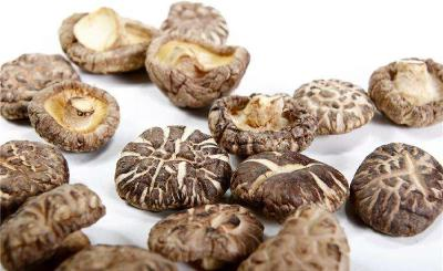 省食用菌协会专家为随州市老区袋料香菇会诊