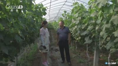 邓家老湾村:发展特色水果 助力乡村振兴