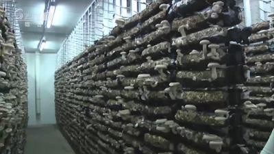 裕国菇业:加大新品研发 推动转型升级