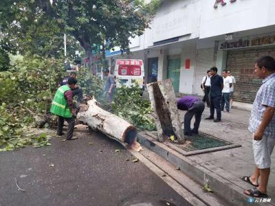 市绿化管理处 清理道路危树,维护市民安全