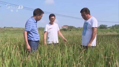 V视|广水关庙镇:科学调度水源  全力抗旱保丰收