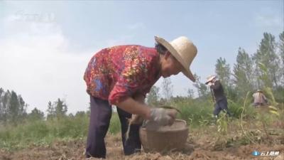 电商平台卖红薯 产销对接增收快(上)