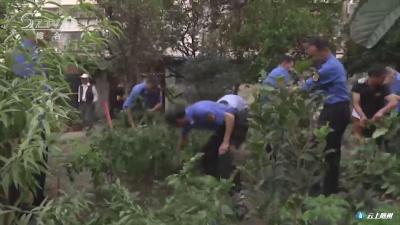 新闻追踪:城管部门铲除小区菜地