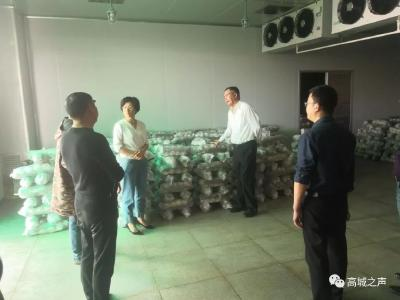 香菇产业发展 随县领导关心三件事